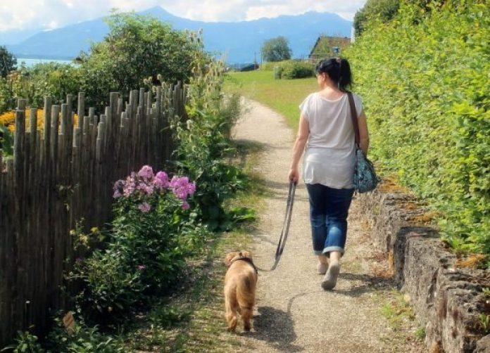 Boost brain power by getting outdoors with your dog