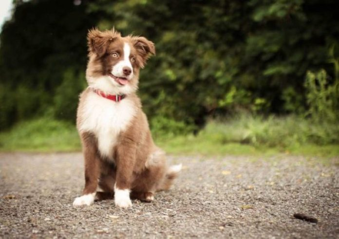 Dogs can improve mental health