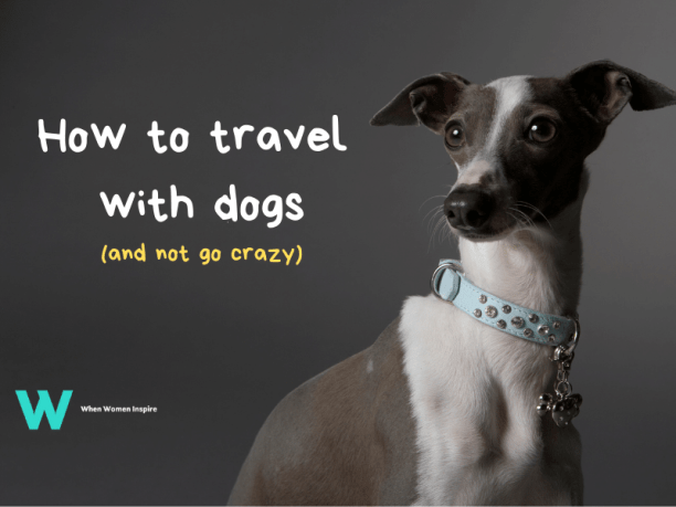 How to travel with dogs easier