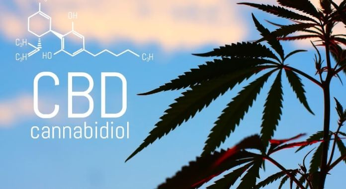 Your body on CBD