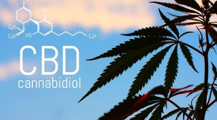 CBD and the body