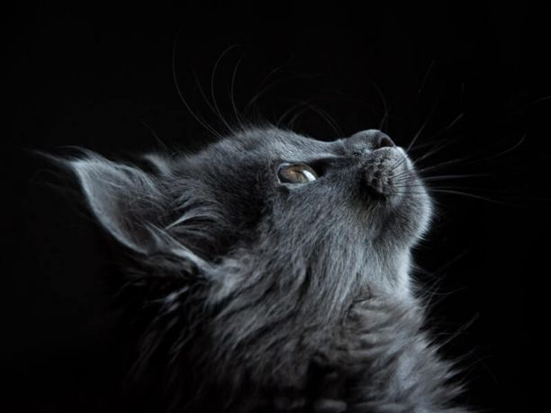 Cat anorexia symptoms, treatment