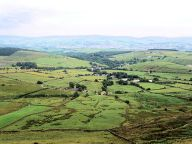 Barley from Pendle Hill