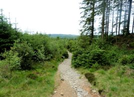 Grizedale Forest