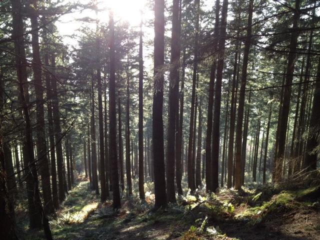 Woods on Dodd