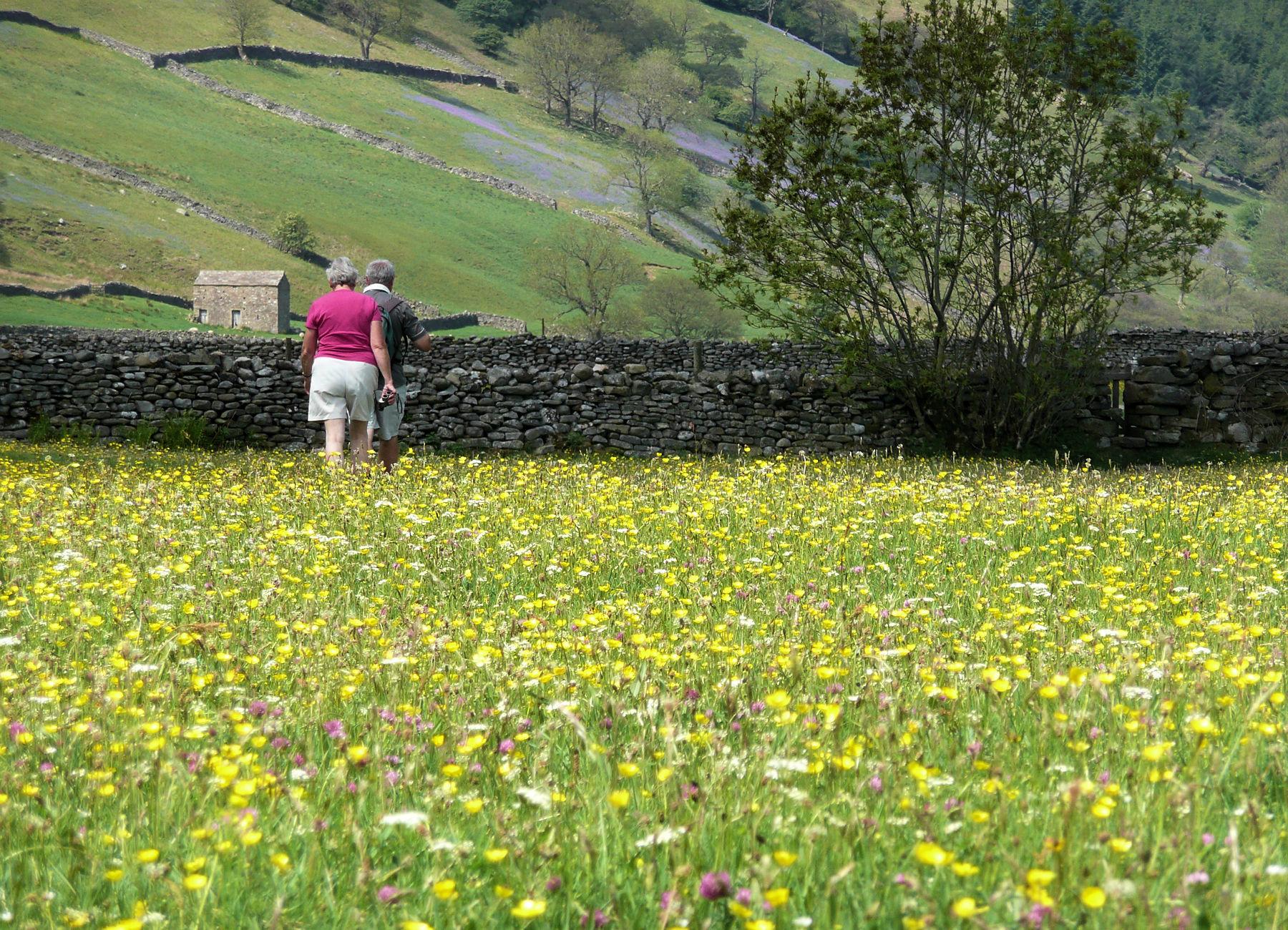 Hay Meadow Muker
