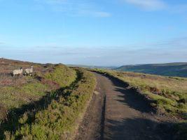 Farndale Moor