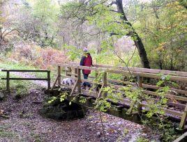 Woods east of Osmotherley