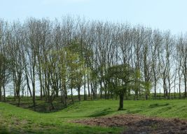 Burial grounds at Cottam