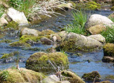 Hareden Brook