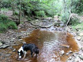 Embryonic River Derwent