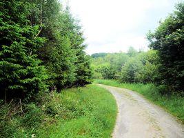 Blue Walkers Path