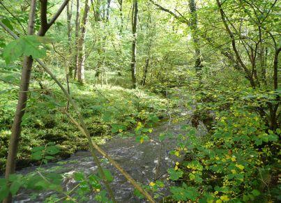 Near Dunsop Bridge
