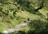 Near Ogden Water