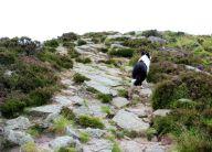 Approach path