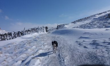 Snow at Settle
