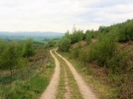 Forest track near Flasby
