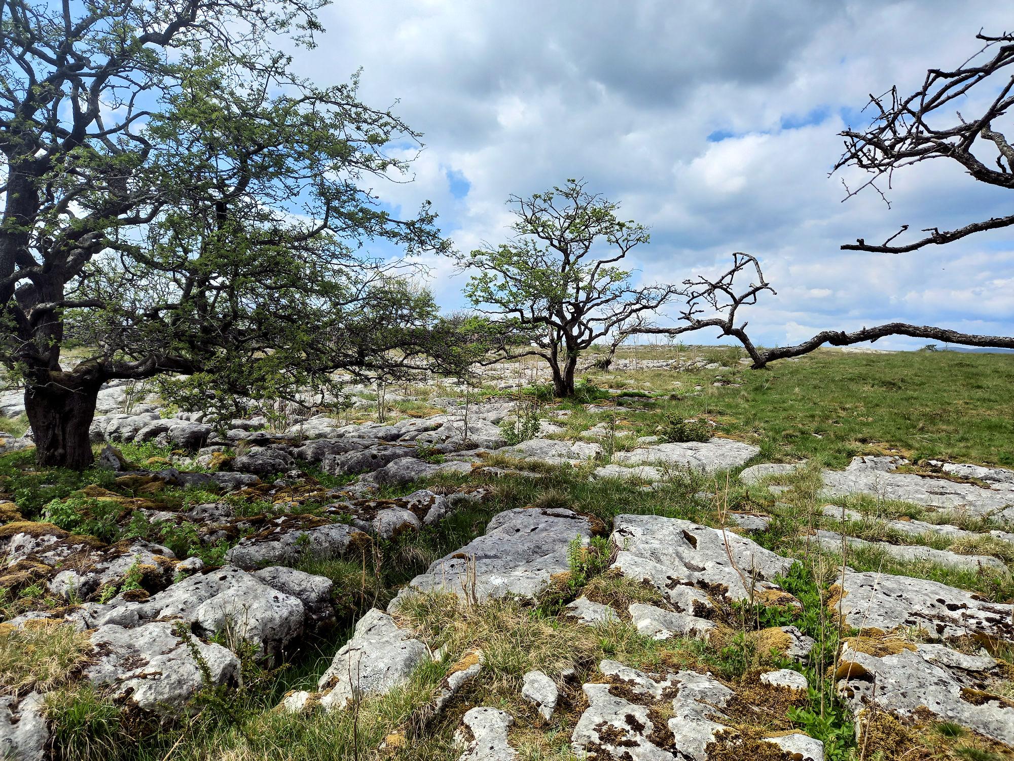 Limestone Pavement above Grassington