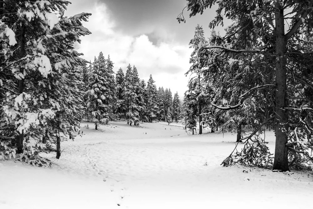 Snow in June at Yellowstone National Park