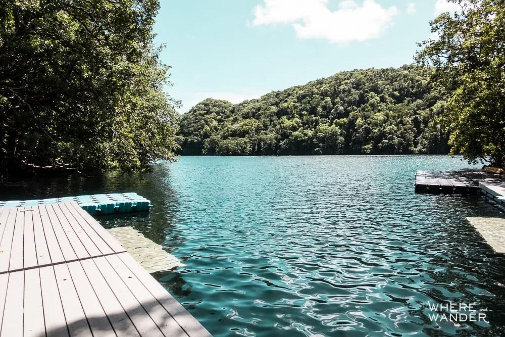 Jellyfish Lake Dock In Palau