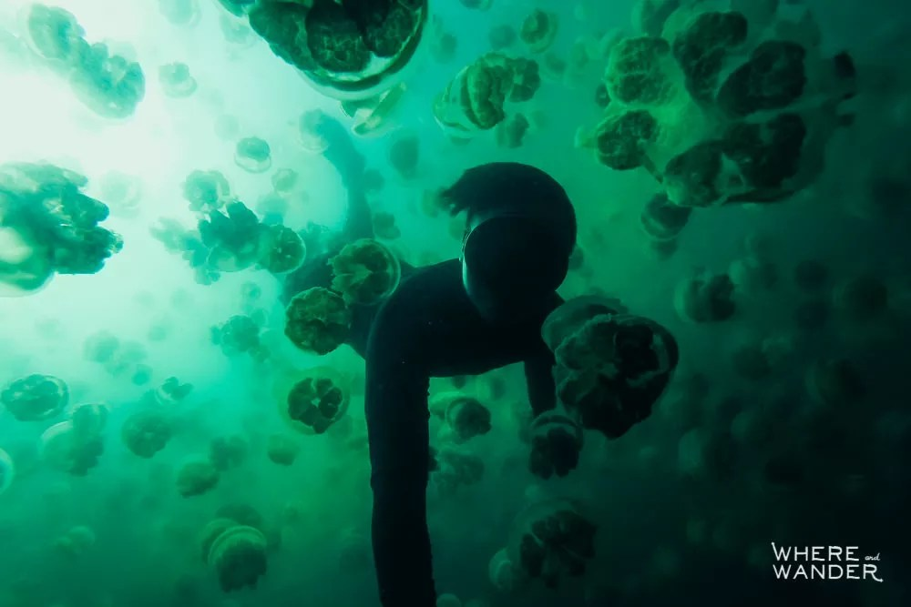 Bucket List: Snorkeling With Jellyfish In Palau