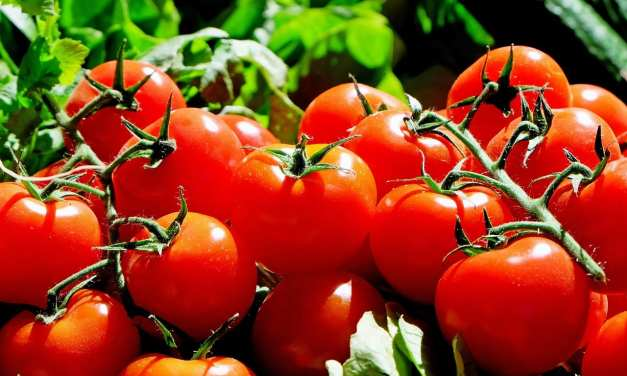 Quinoa and Spinach Stuffed Tomatoes from Hansen Garbarino Vineyards