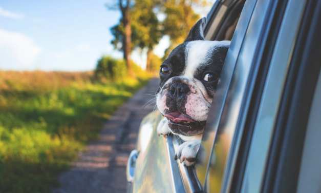 Summer Tips for Traveling with Pets