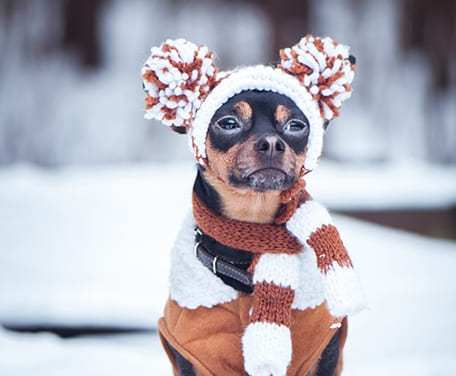 4 Tips to Prepare Your Pup for Winter