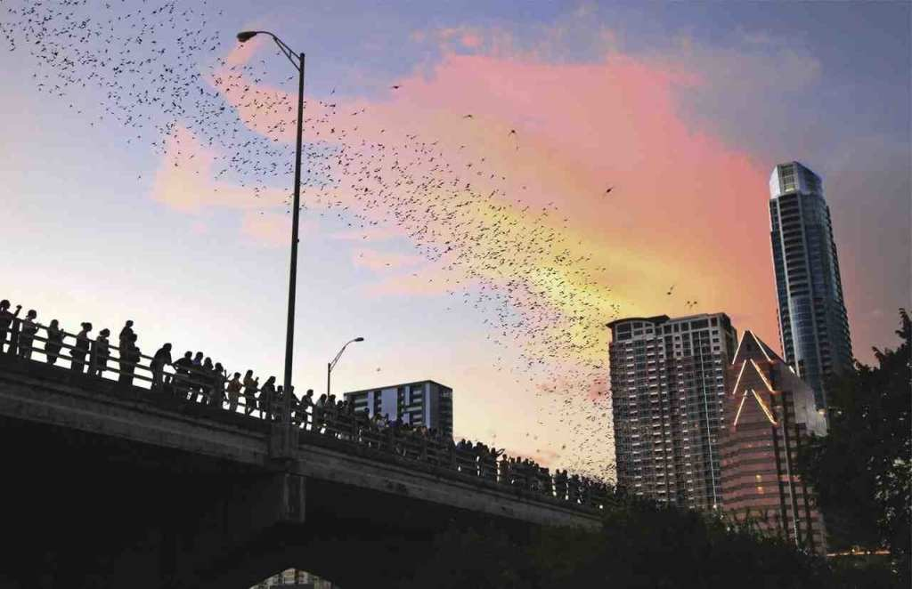 Bats at the Congress Avenue Bridge