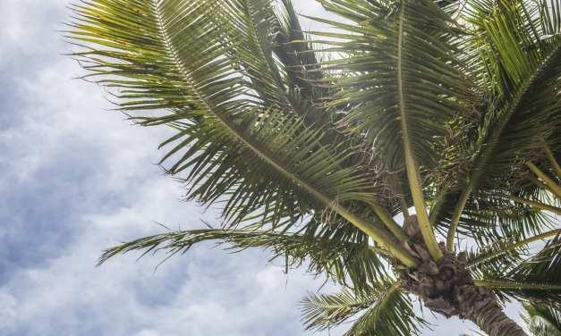 Ways To Beat Florida's Summer Heat