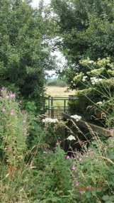 Path to Poynings