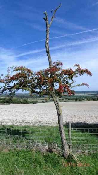 Hawthorn-looking towards Saunderton