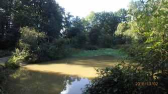Apostles Pond, Chipperfield