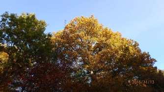 More-Autumn-colours