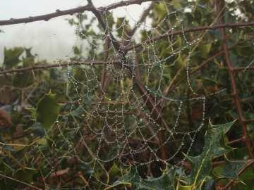 Bejewelled spider's web