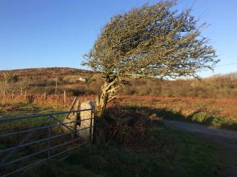 Windswept-Rosewall-Hill