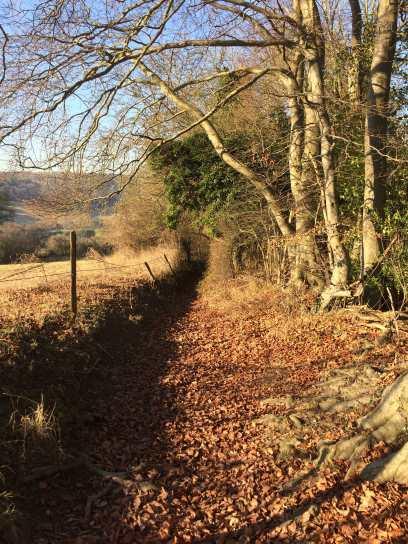 Hatchet Wood, Frieth