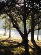 Winter light, Commemoration Hill