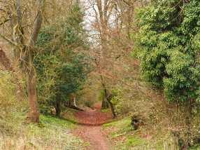 Spring returns to Grim's Ditch