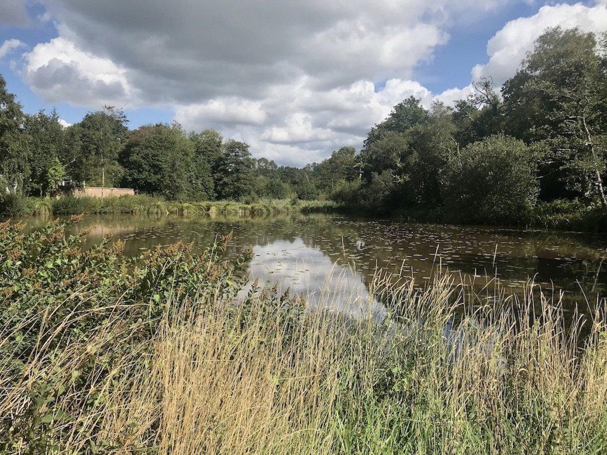 Waterlily Lake