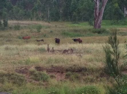 Watching the kangeroos - and them watching us right back!