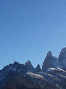 A condor over the Fitz Roy range!