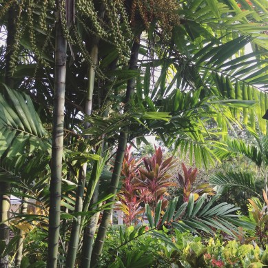 Palms, Trees, and Big Leafs