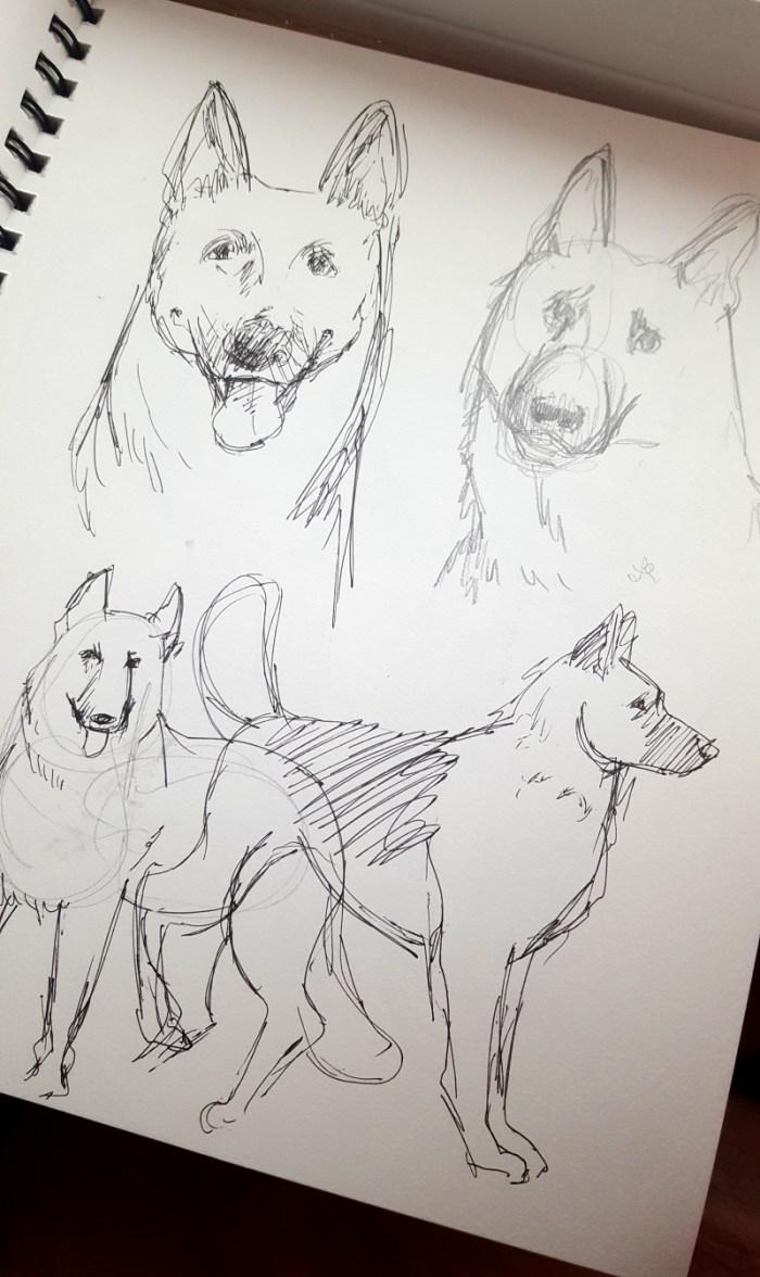 Dog practice sketches