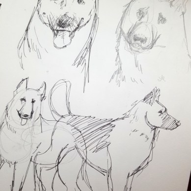 Dog practice sketches
