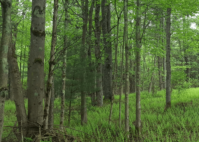 Some woods
