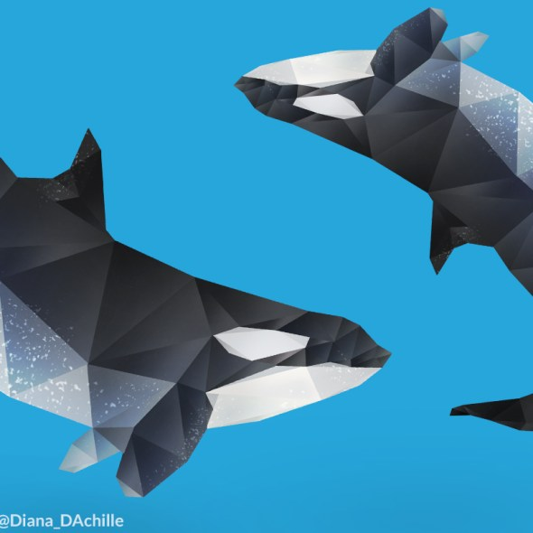 diana-dachille-orca-featured-image
