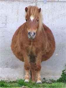 Is this horse fat?