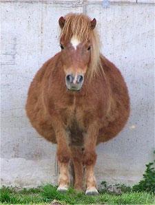Fat-Horse