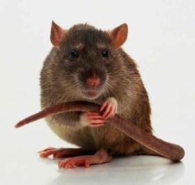 Did Chris Brown get RAT status?_Where Excuses Go to Die